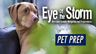 Go YouTube: Pet Prep for Hurricane Season